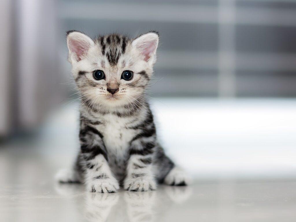 آیا احتمال ابتلای گربهها به بیماری کووید ۱۹ وجود دارد؟